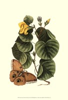 Sm Catesby Butterfly&Botan. I (P) Fine Art Print