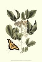 Sm Catesby Butterfly&Botan. II (P) Fine Art Print