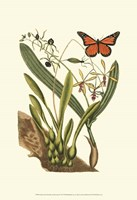 Sm Catesby Butterfly&Botan. IV (P) Fine Art Print