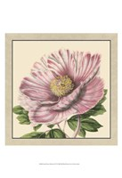 """Small Peony Collection II (P) by Vision Studio - 13"""" x 19"""""""