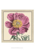 """Small Peony Collection III (P) by Vision Studio - 13"""" x 19"""""""