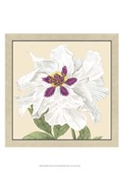 """Small Peony Collection IV (P) by Vision Studio - 13"""" x 19"""""""