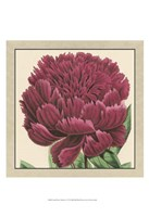 """Small Peony Collection V (P) by Vision Studio - 13"""" x 19"""""""