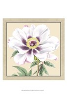 """Small Peony Collection VI (P) by Vision Studio - 13"""" x 19"""""""