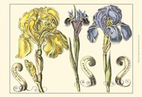 Small Iris in Bloom I (P) Fine Art Print