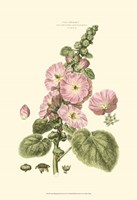 Small Blushing Pink Florals V (P) Fine Art Print