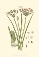 Small Blushing Pink Florals VIII(P) Fine Art Print