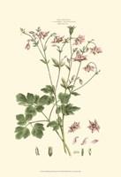 Small Blushing Pink Florals IX (P) Fine Art Print