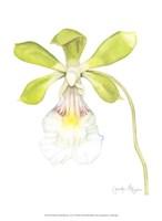 """Small Orchid Beauty I (U) by Jennifer Goldberger - 10"""" x 13"""""""