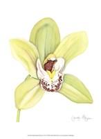 """Small Orchid Beauty II (U) by Jennifer Goldberger - 10"""" x 13"""""""