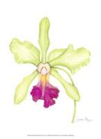 """Small Orchid Beauty III (U) by Jennifer Goldberger - 10"""" x 13"""""""