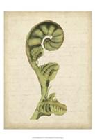 """Small Fiddlehead Ferns I (U) by Jennifer Goldberger - 13"""" x 19"""""""