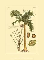 Printed Exotic Palm V Fine Art Print