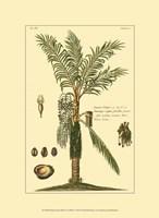 Printed Exotic Palm VI Fine Art Print