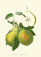 """10"""" x 13"""" Pear Pictures"""