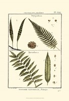 Fern Classification I Fine Art Print