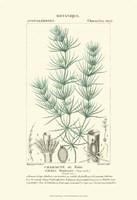 Botany I Fine Art Print