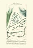 Botany III Fine Art Print