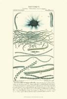 Botany IV Fine Art Print