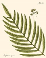 Small Antique Fern I Fine Art Print