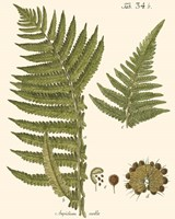 Small Antique Fern III Fine Art Print