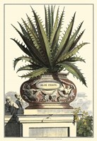 Antique Munting Aloe I Fine Art Print