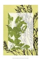 "Sm Translucent Wildflowers III by Jennifer Goldberger - 13"" x 19"""