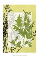 "Sm Translucent Wildflowers IV by Jennifer Goldberger - 13"" x 19"""