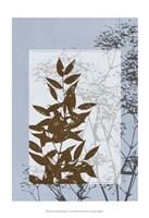 "Sm Translucent Wildflowers V by Jennifer Goldberger - 13"" x 19"""