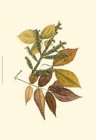 Sm Elm, Spruce, Beech & Ash Fine Art Print