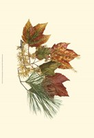 Sm Red Maple,Tamarack & Wh Pine Fine Art Print