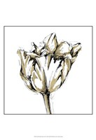 "Small Tulip Sketch I by Ethan Harper - 13"" x 19"""