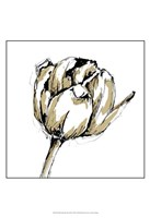 "Small Tulip Sketch II by Ethan Harper - 13"" x 19"""