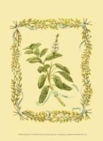 Small Sage Fine Art Print