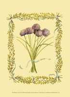 Small Chives Fine Art Print