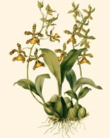 Orchid Array II Fine Art Print