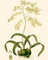 Orchid Array III Fine Art Print