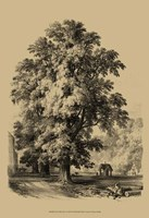The Elm Tree Fine Art Print