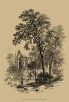 The Ash Tree Fine Art Print