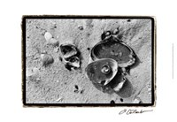 "Sand Treasures II by Laura Denardo - 19"" x 13"""