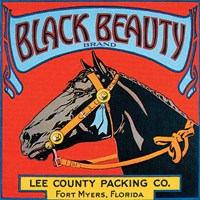 Black Beauty by Vision Studio - various sizes, FulcrumGallery.com brand