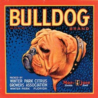 Bull Dog by Vision Studio - various sizes