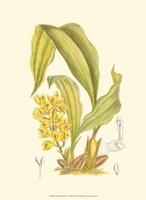 Orchid Plenty I Fine Art Print