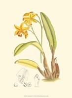 Orchid Plenty IV Fine Art Print