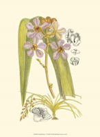 Orchid Plenty V Fine Art Print
