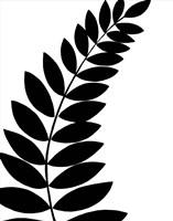 Leaf Silhouette I Fine Art Print