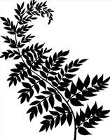 Leaf Silhouette III Fine Art Print