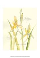 Elissa's Garden IV Fine Art Print
