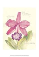 Elissa's Garden V Fine Art Print