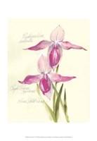 Elissa's Garden VI Framed Print